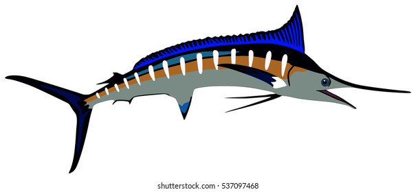 Marlin Fish lives is ocean under deep blue water life one of top sea predators