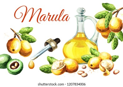 Marula card. Watercolor hand drawn illustration  isolated on white background