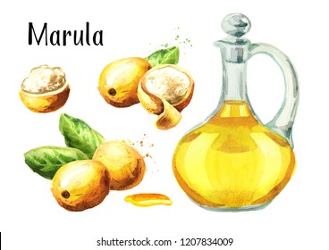 Marula Oil set. Watercolor hand drawn illustration,  isolated on white background