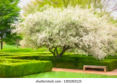 Massive white cloudlike bloom of Japanese flowering crabapple (binomial name: Malus floribunda) surrounded by green garden hedges in spring, with digital painting effect and canvas texture
