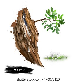 Mastic resin obtained from the mastic tree Pistacia lentiscus. Mastic coming from the tree. In pharmacies and nature shops called Arabic gum and Yemen gum. Herbs and spices collection. Digital art.