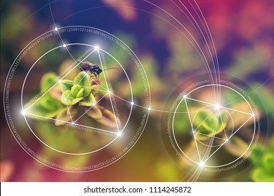 """Mathematical symbols and golden ratio digits in the world. Sacred geometry  formula of nature. Greek letters quote """"There is no beginning and no end of the Universe,  the Life and the Bliss""""."""