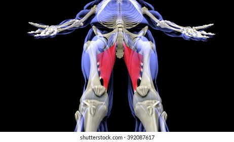 Mayor adductor inferior frontal projection