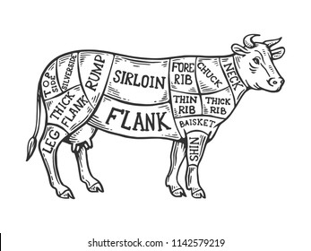 meat diagram cow engraving vector illustration stock vector royalty Bovine Skeleton Diagram meat diagram cow engraving raster illustration scratch board style imitation black and white hand