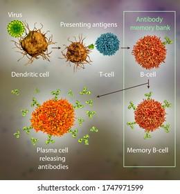 Mechanisms of immune defense against viruses, 3D illustration