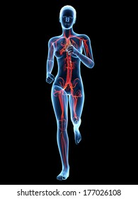 medical 3d illustration - female jogger with visible cardiovascular system