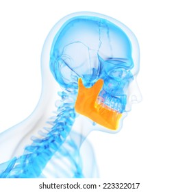 medical 3d illustration of the jaw bone