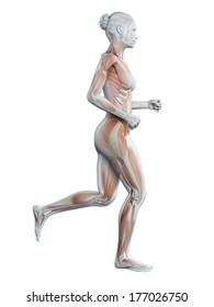 medical 3d illustration - jogging woman - visible muscles