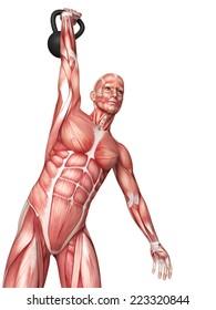 medical 3d illustration of a kettlebell exercise