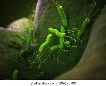 Helicobacter Pylori Images Stock Photos Vectors Shutterstock