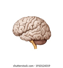 Medical illustration for explanation brain