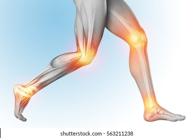 Medical illustration of a leg pain in anatomy transparent view. The skeleton, muscles, showing separate parts. 3d render
