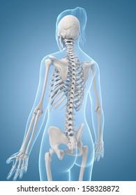 medical illustration of the skeletal back