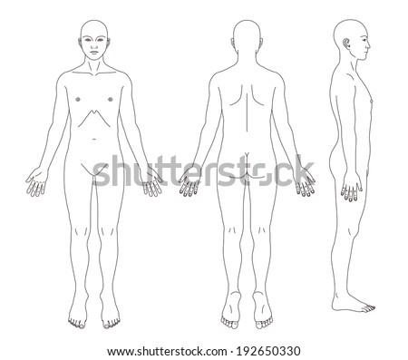 Medical Record Human Body Diagram No Stock Illustration 192650330