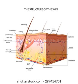 medical skin structure