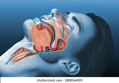 Medically 3D illustration shows a sleeping snoring man