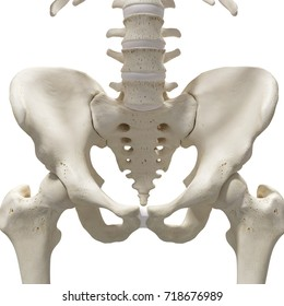 medically accurate 3d rendering of the hip and sacrum