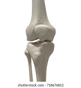 medically accurate 3d rendering of the knee