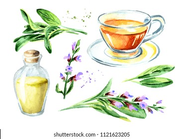 Medicinal   herb Salvia officinalis set. Cup of medical tea. Infusion made from sage leaf. Essential oil bottle. Plant with green leaves and flower.  Hand drawn watercolor illustration,  isolated