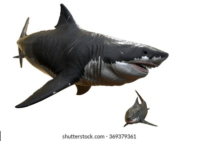 1000+ Megalodon Stock Images, Photos & Vectors | Shutterstock