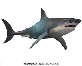 Megalodon on White - The Megalodon is an extinct megatoothed shark that existed in prehistoric times, from the Oligocene to the Pleistocene Epochs.