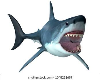 Megalodon Predator Shark 3D illustration - Megalodon was an enormous carnivorous shark that roamed the oceans of the Pleistocene Period.