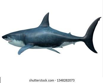 Megalodon Predator Shark Tail 3D illustration - Megalodon was an enormous carnivorous shark that roamed the oceans of the Pleistocene Period.