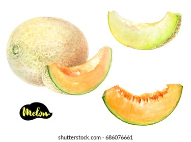 Melon watercolor illustration. Melon slice, melon cut, cantaloupe whole isolated on white background
