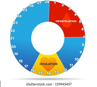 Menstrual cycle graphic. Average menstrual cycle days. Bleeding period (red color) and ovulation (yellow). Isolated on white.