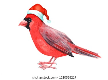 Merry Christmas hatted bird greeting decoration. Hand painted red cardinal bird isolated on white illustration. Fun and joy decoration use for kids card, web, cover and prints..
