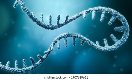 Messenger RNA or mRNA strand 3D rendering illustration with copy space. Genetics, science, medical research, genome replication concepts.