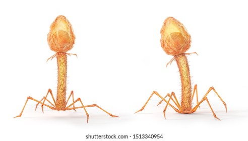Microbiology concept. Bacteriophages isolated on a white background. 3d illustration