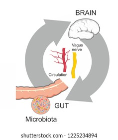 Microbiota communicate bidirectionally with the gut-brain axis.