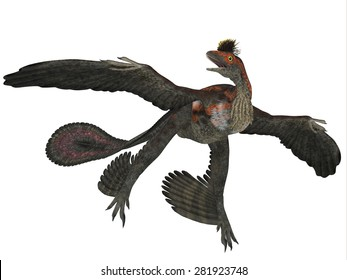 Microraptor Dinosaur Profile - Microraptor was a flying dinosaur reptile and lived in China and Mongolia in the Cretaceous Periods.