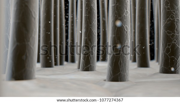 A microscopic closeup view of strands of textured hair rooted into the  skin on a scalp - 3D render