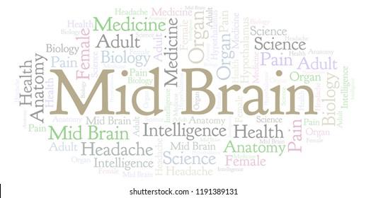 Mid Brain Images Stock Photos Vectors Shutterstock