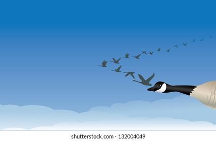 Migrating Geese. JPG