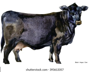 Milking cow watercolor illustration. Black Angus Breed