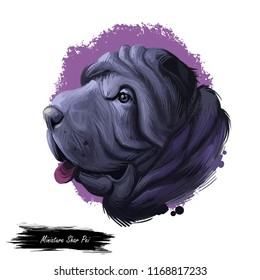 Miniature mini shar pei dog, profile portrait digital art illustration. Pet bred from recessive gene of shar-pei, Chinese originated puppy. Animal from China with wide padded muzzle, highly set ears