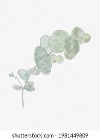 Minimalist and elegant watercolor eucalyptus branch illustration