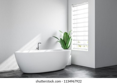 Minimalistic bathroom corner with white walls, a tiled black floor, and a white bathtub with a potted plant standing near it. Scandinavian style. 3d rendering mock up