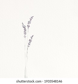 Minimalistic drawing of lavender. Background with paper texture.