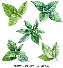 Mint leaves watercolor illustration set isolated on white background.