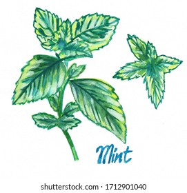 Mint watercolor hand drawing illustration