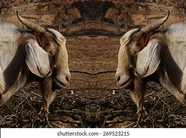 Mirror image of a male goat with poster edge effect added. Browns and tans. Stunning illustration.