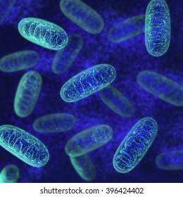 Mitochondria - microbiology 3d illustration