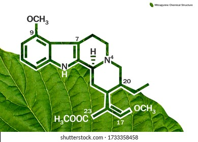 Mitragyna speciosa (Kratom leaves)  Chemical Structure. Thai herbal which encourage health.