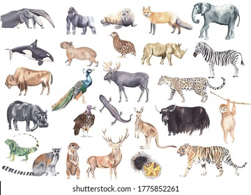 Mix of watercolor hand drawn and hand illustrated animals Safari, jungle and tropical animals and birds Zebra sloth tiger jaguar fox bison newt elephant Watercolor clipart Stickers Nursery decor cute