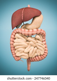 model of the digestive system isolated on blue background
