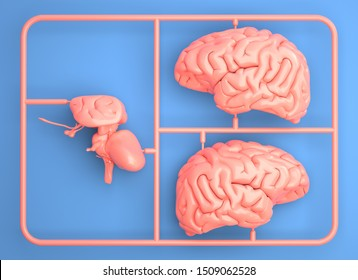 Model kit set with pink brain parts. 3D illustration
